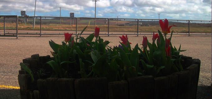 Flower tub arty (windy spring)